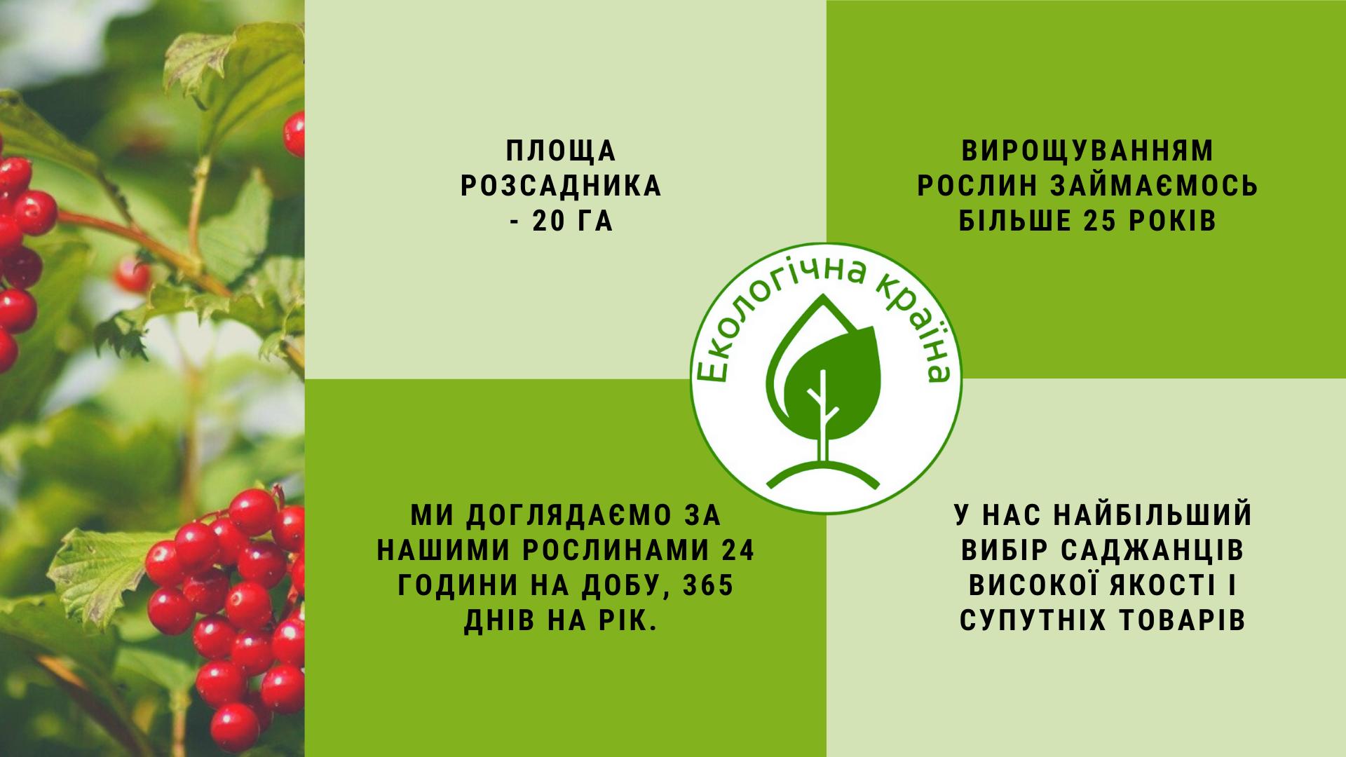 ЕКО-КРАЇНА - розсадник декоративних рослин - про нас