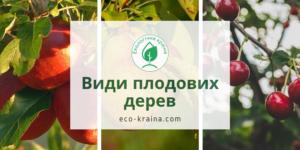 Види плодових дерев в ЕКО-КРАЇНА: яблуня, груша і вишня