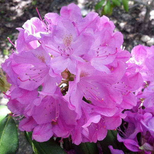 Багаторічники, трави, квіти