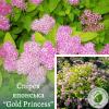 """Спірея японська """"Gold Princess"""" 0,3-0,4 м - ЕКО-КРАЇНА"""