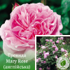 Троянда Mary Rose (Мері Роуз) - розсадник ЕКО-КРАЇНА