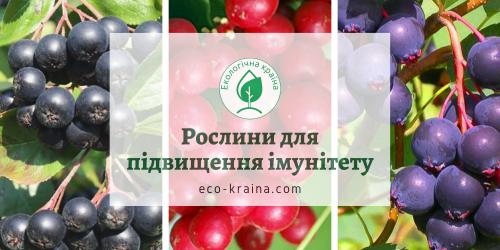 рослини для імунітету