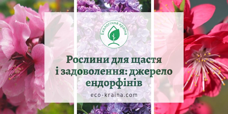 Рослини від ЕКО-КРАЇНА для щастя і задоволення