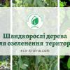 список самих швидкорослих дерев, з акцентом на те, в яких місцях їх садити