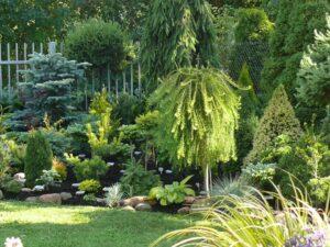 Швидкорослі дерева для озеленення території