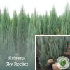 """Ялівець """"Sky Rocket"""" 1,6-1,9 м - розсадник ЕКО-КРАЇНА"""