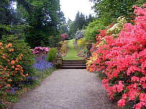 Запашні кущі для саду