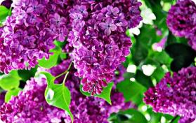 Квіти та Гарноквітучі