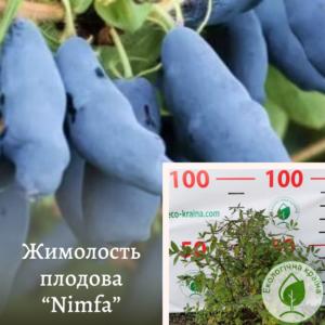 """Жимолость плодова """"Nimfa"""" c3"""