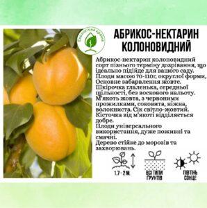 Абрикос-нектарин колоновидний