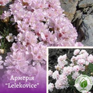 "Армерія ""Lelekovice"""