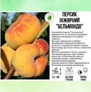 """Персик іжирний """"Бельмондо"""""""