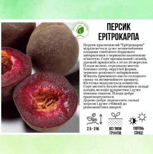 "Персик ""Ерітрокарпа"""