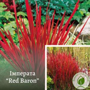 "Імперата  ""Red Baron"""