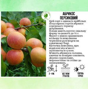 """Абрикос """"Персиковий"""""""