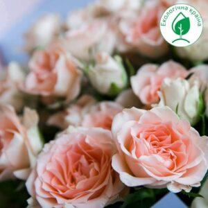 """Троянда """"Sara"""" c7"""