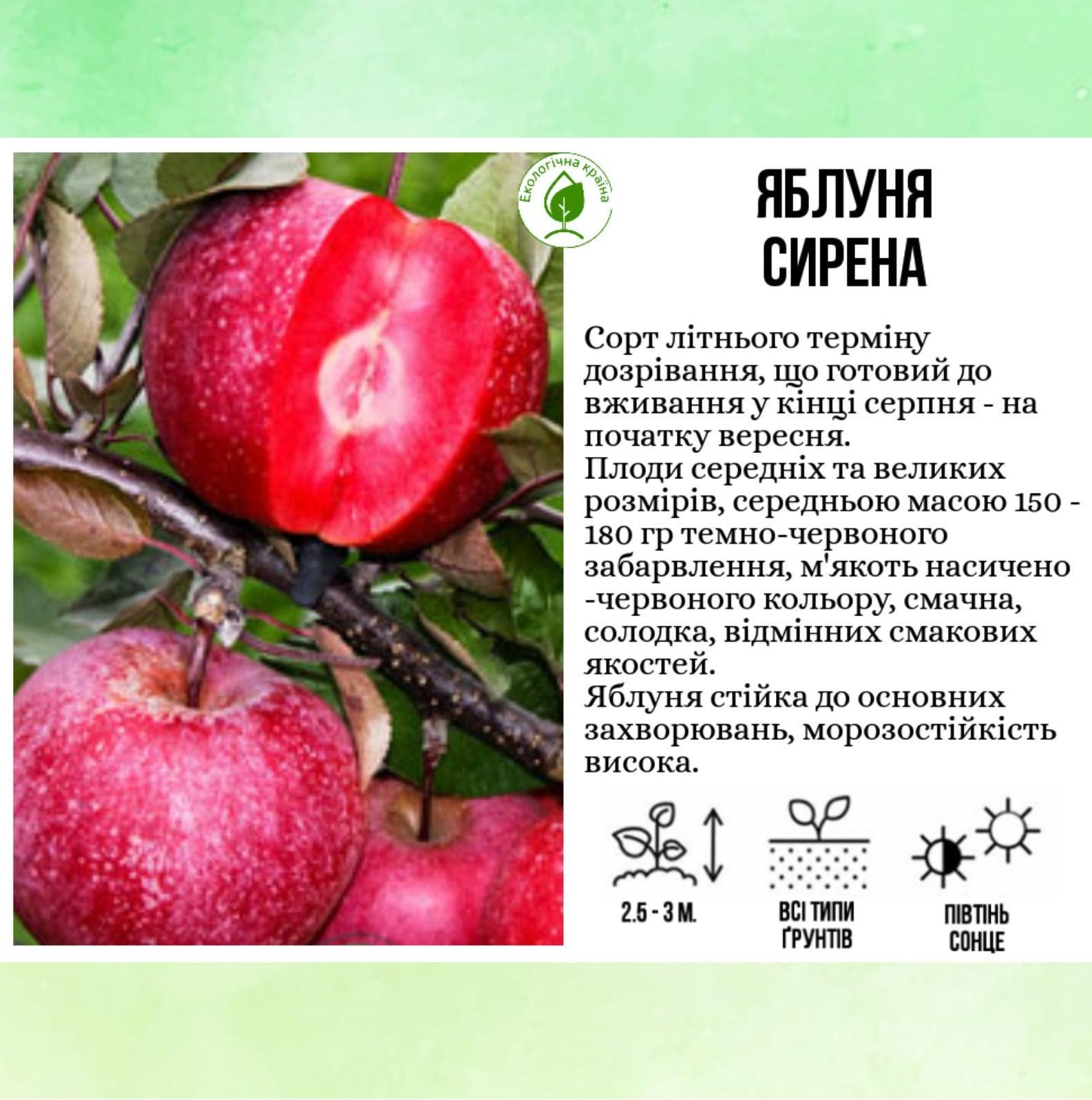 """Яблуня """"Сирена"""""""