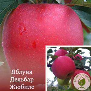 """Яблуня """"Дельбар Жюбіле"""" с15"""