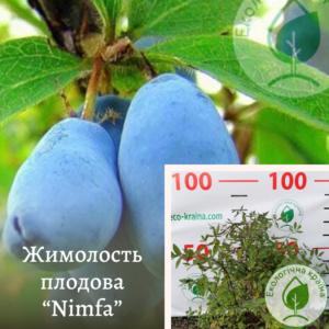 """Жимолость плодова """"Nimfa"""" (з комом)"""