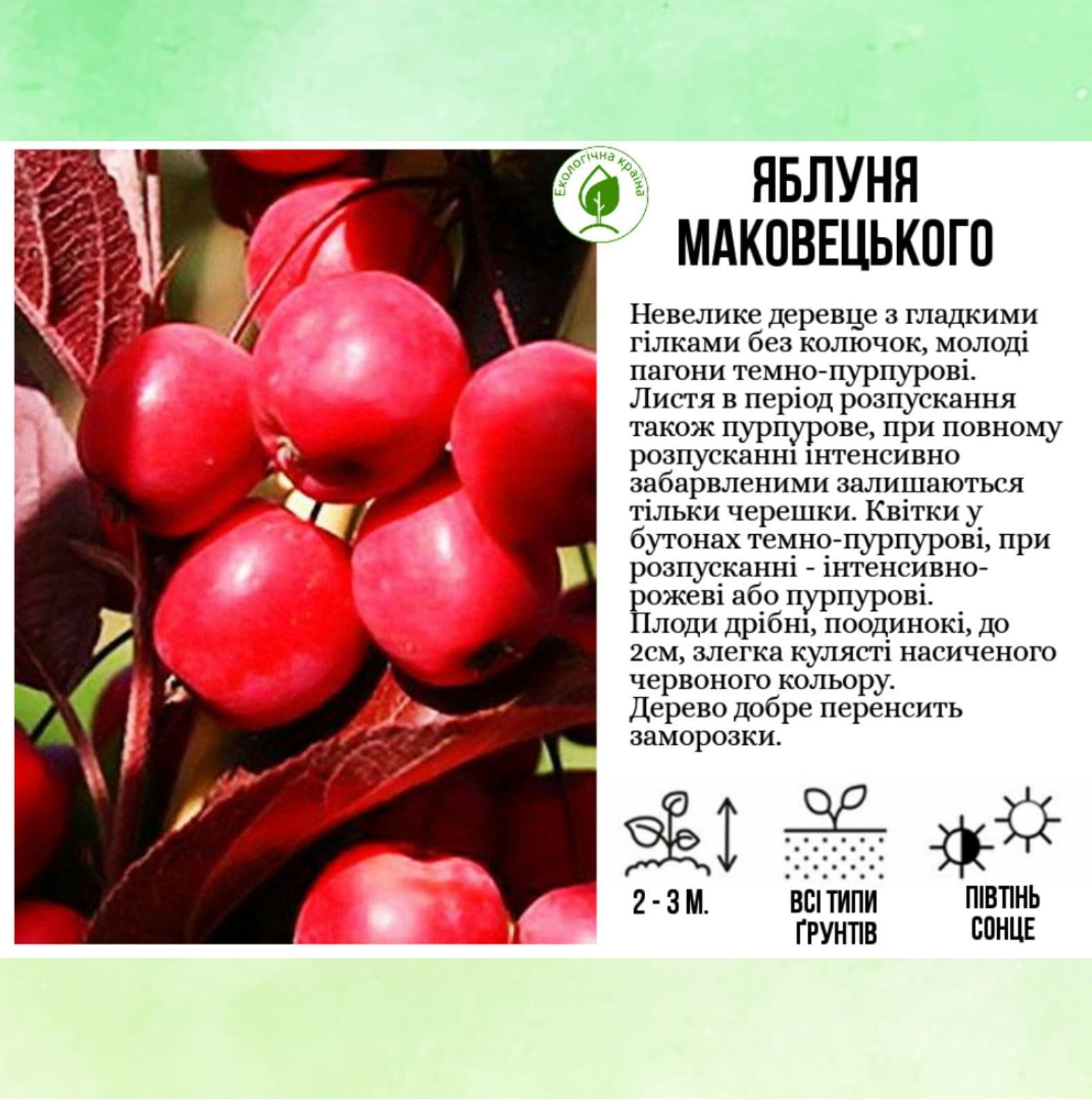 """Яблуня """"Маковецького"""""""