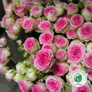 """Троянда """"Mimi Eden"""" ВКС"""